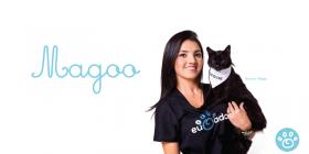 Magoo: Conheça a história desse Gato preto sortudo!