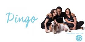 Pingo: Eles se encontraram no Instituto Santo Pet e deram sentido à vida de um ao outro.