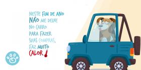 Os perigos de deixar seu cão dentro do carro