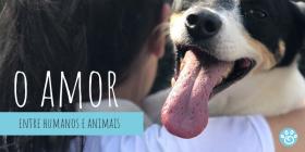 Seres humanos e animais: amor que só faz bem