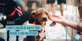 Como a adoção de um pet pode mudar a vida das pessoas