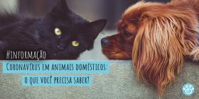 Coronavírus em animais domésticos: o que você precisa saber?