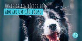 Quais os benéficos de adotar um cão idoso?