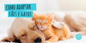 Como adaptar cães e gatos