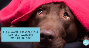 5 cuidados fundamentais com seu cachorro neste final de ano