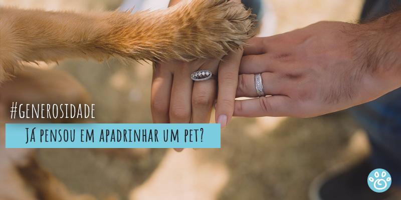 Já pensou em apadrinhar um pet?