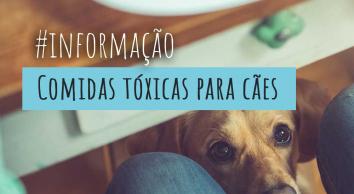 Conheça os alimentos tóxicos para cães e gatos.
