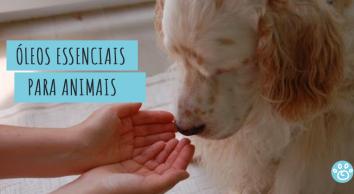 Óleos essenciais para Pets: o que você precisa saber!