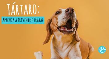 Tártaro: aprenda como prevenir e tratar
