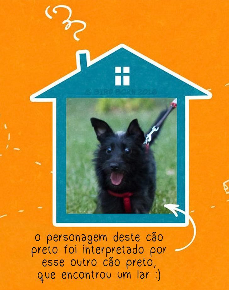 10+ Coisas que percebemos quando adotamos um cão de abrigo