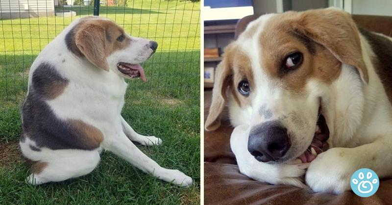 Cão é abandonado por nascer com metade da espinha, sobrevive e encanta o mundo com seu sorriso