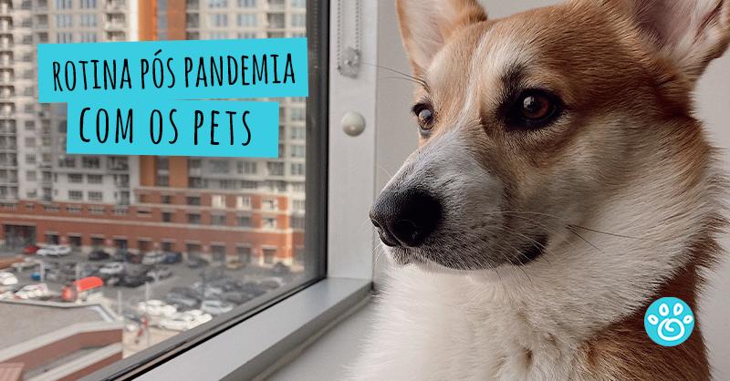 Rotina pós pandemia com os pets