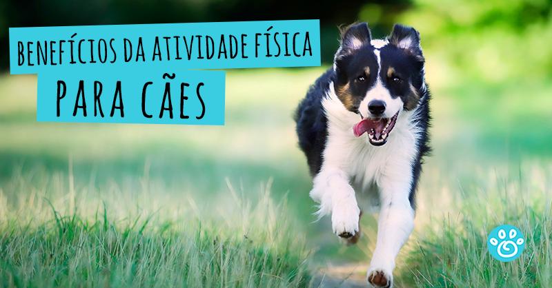 Benefício da atividade física para cães
